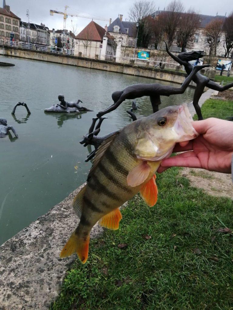 Perche prise en Street Fishing a Troyes