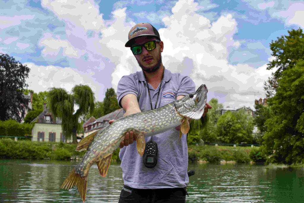 Une journée avec un guide de pêche en Seine, un beau brochet capturé aux leurres !