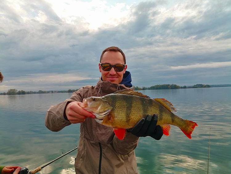 Une grosse perche prise par un client lors d'une journée de pêche sur les lacs de la Foret d'Orient