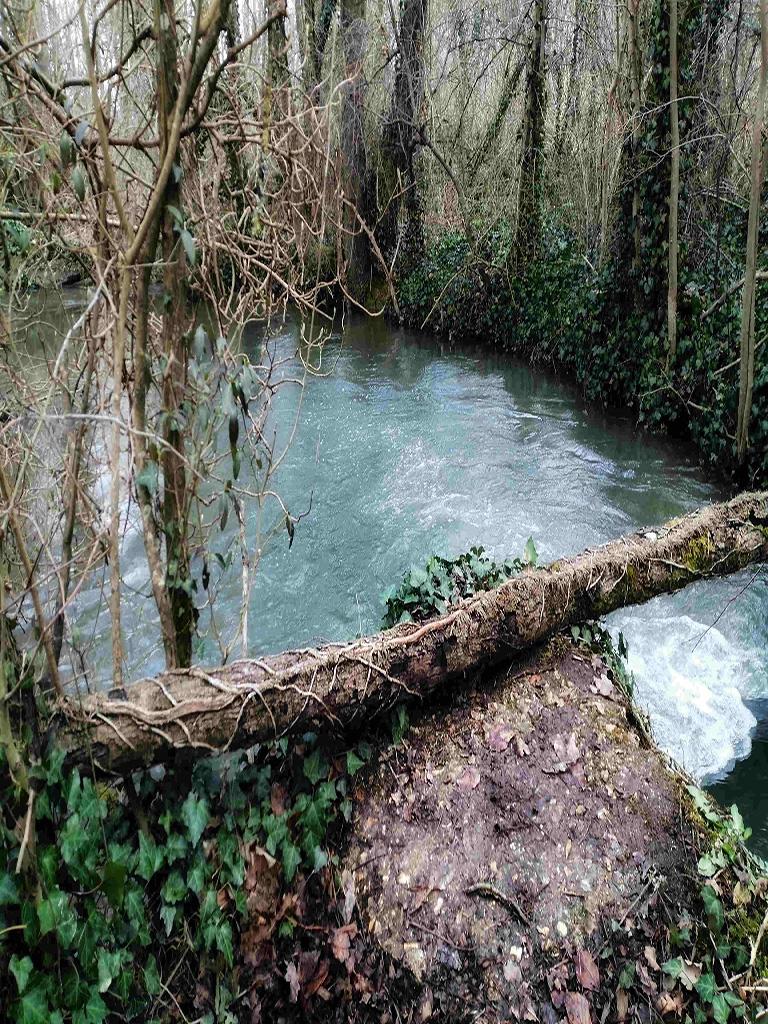 Une jolie veine d'eau a prospecter au toc sur un ruisseau de pleine.